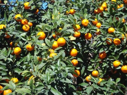 Naranjas_Valencia
